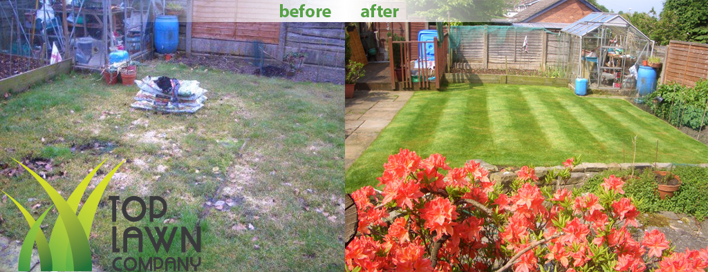 Lawn-before-after